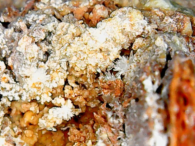 Aragonite et ou calcite Win_2854