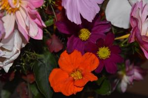 bouquets de souvenirs d'été 210