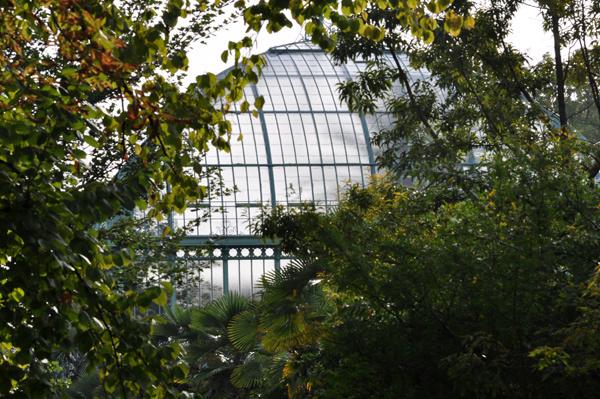 (75) Jardin des serres d'Auteuil - Paris Ob_e8210