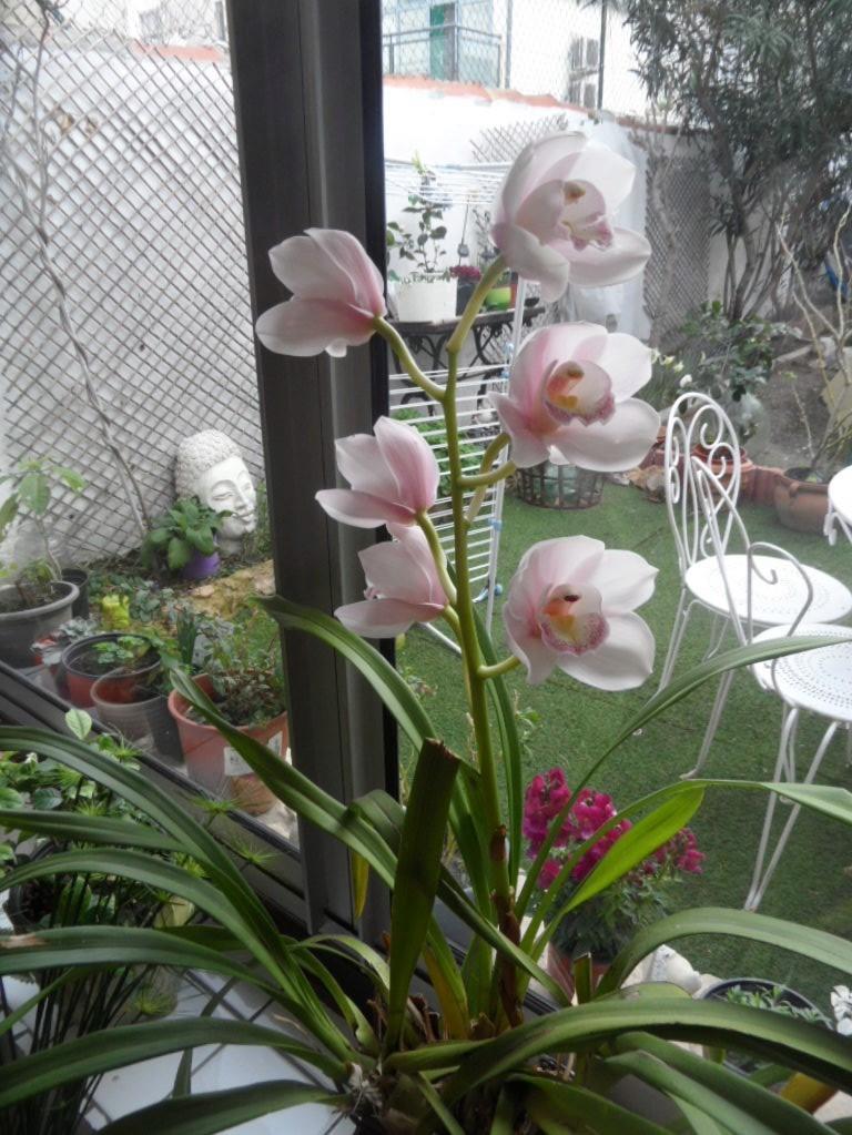 floraisons des orchidées - Page 42 Sam_0012