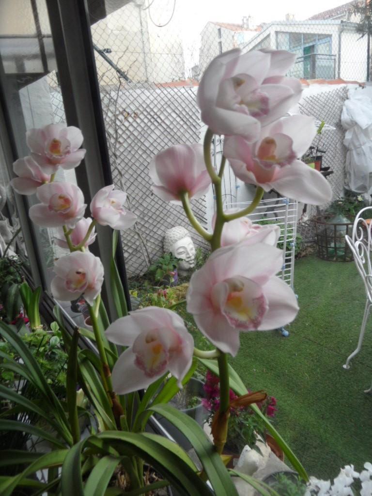 floraisons des orchidées - Page 42 Sam_0013
