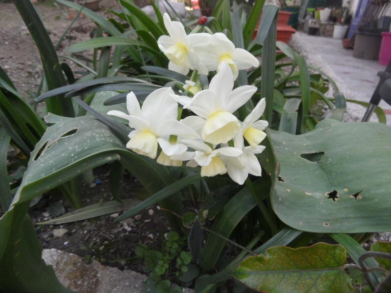 Floraisons du mois d'avril - Page 20 Sam_0110
