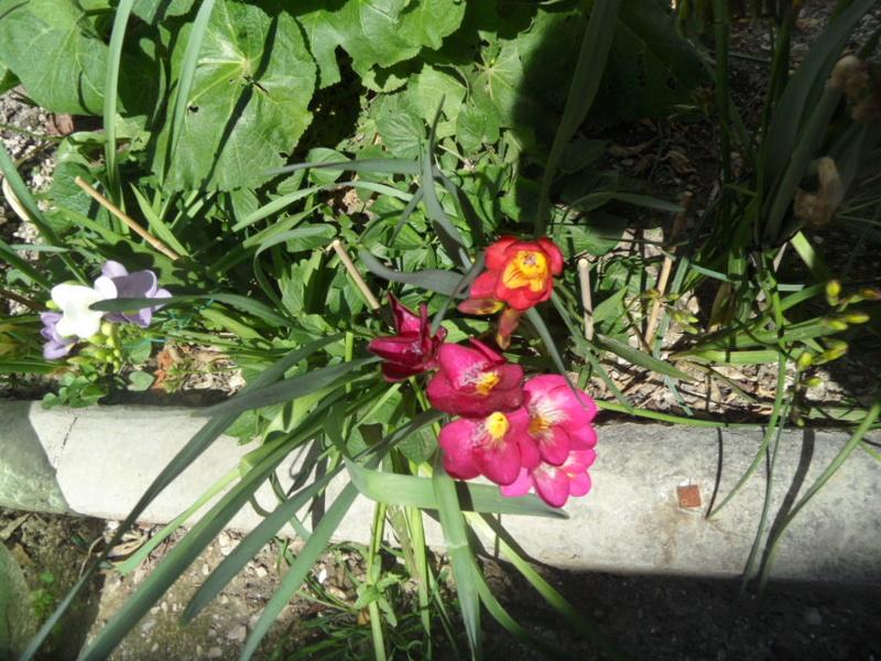 Floraisons du mois d'avril - Page 20 Sam_0115