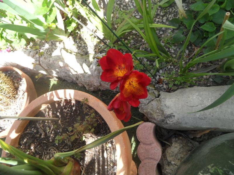 Floraisons du mois d'avril - Page 20 Sam_0116