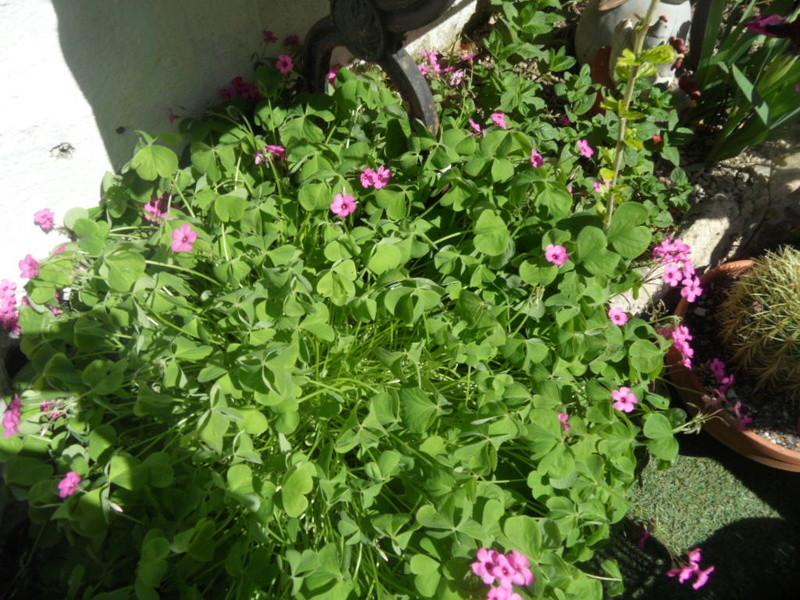 Floraisons du mois d'avril - Page 20 Sam_0118
