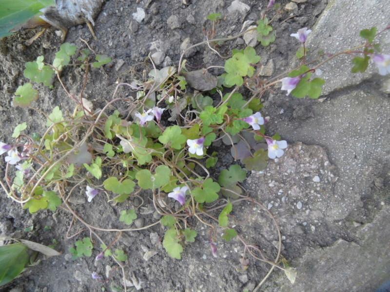 Floraisons du mois d'avril - Page 20 Sam_0123