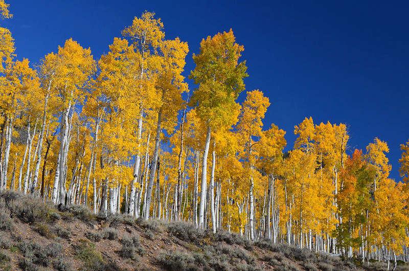 Hommages aux arbres 1024px10
