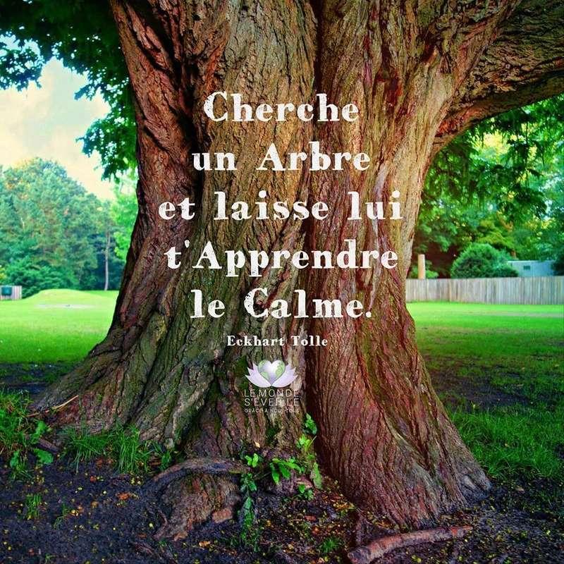 Hommages aux arbres - Page 2 14591810
