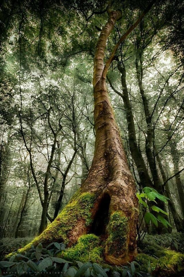 Hommages aux arbres - Page 3 29595310
