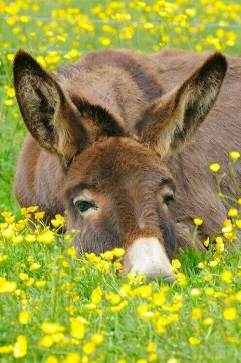 Honneur aux ânes  34037510