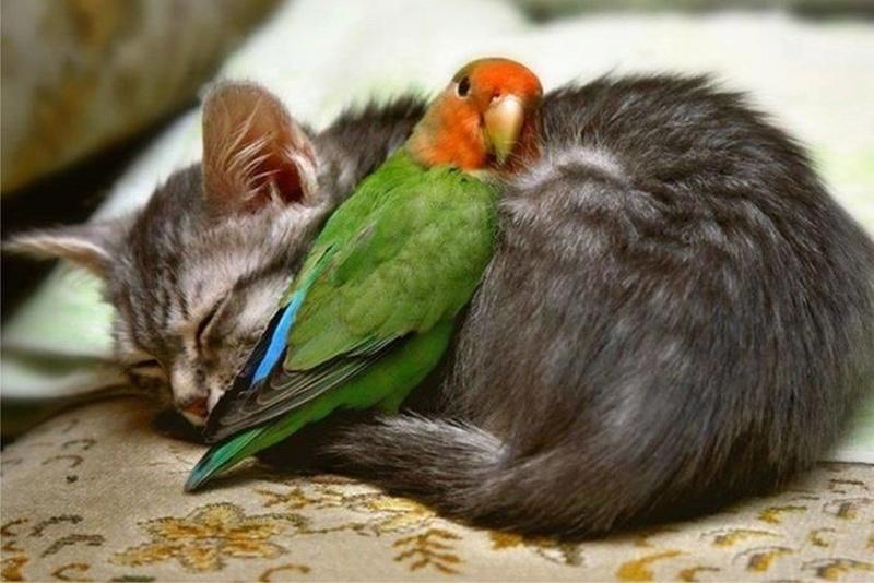 De belles images d'amitié - Page 3 46766010
