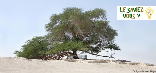 Hommages aux arbres Arbre-10
