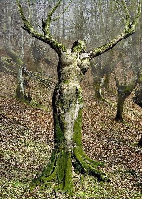 Hommages aux arbres Arbres10