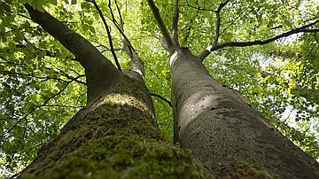 Hommages aux arbres - Page 3 Displa10