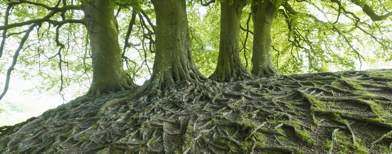 Hommages aux arbres - Page 2 File6u10