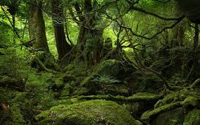 Hommages aux arbres Images14