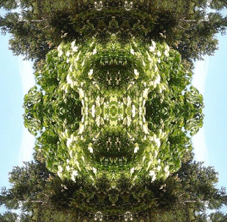 Déclinaison d'un sureau en fleurs Le_sur10