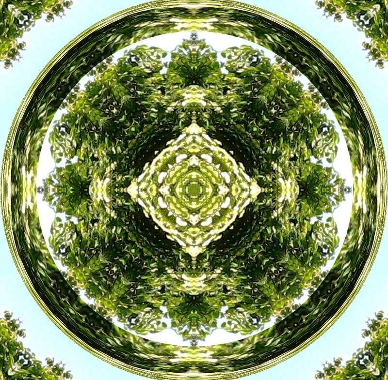 Déclinaison d'un sureau en fleurs Le_sur12