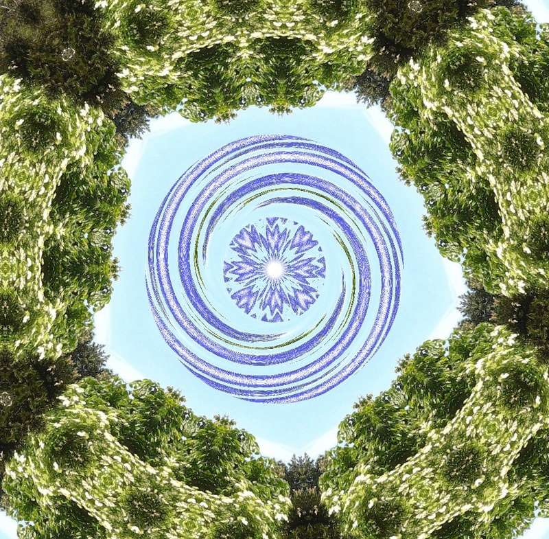 Déclinaison d'un sureau en fleurs Le_sur15