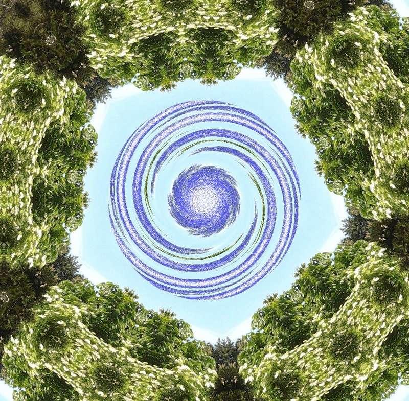 Déclinaison d'un sureau en fleurs Le_sur16