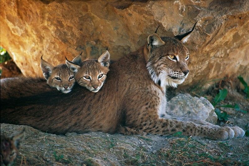 Photos de famille - Page 2 Lynx-e10