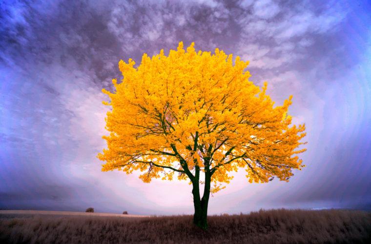 Hommages aux arbres Photo_10
