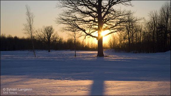 Hommages aux arbres Sylvai10