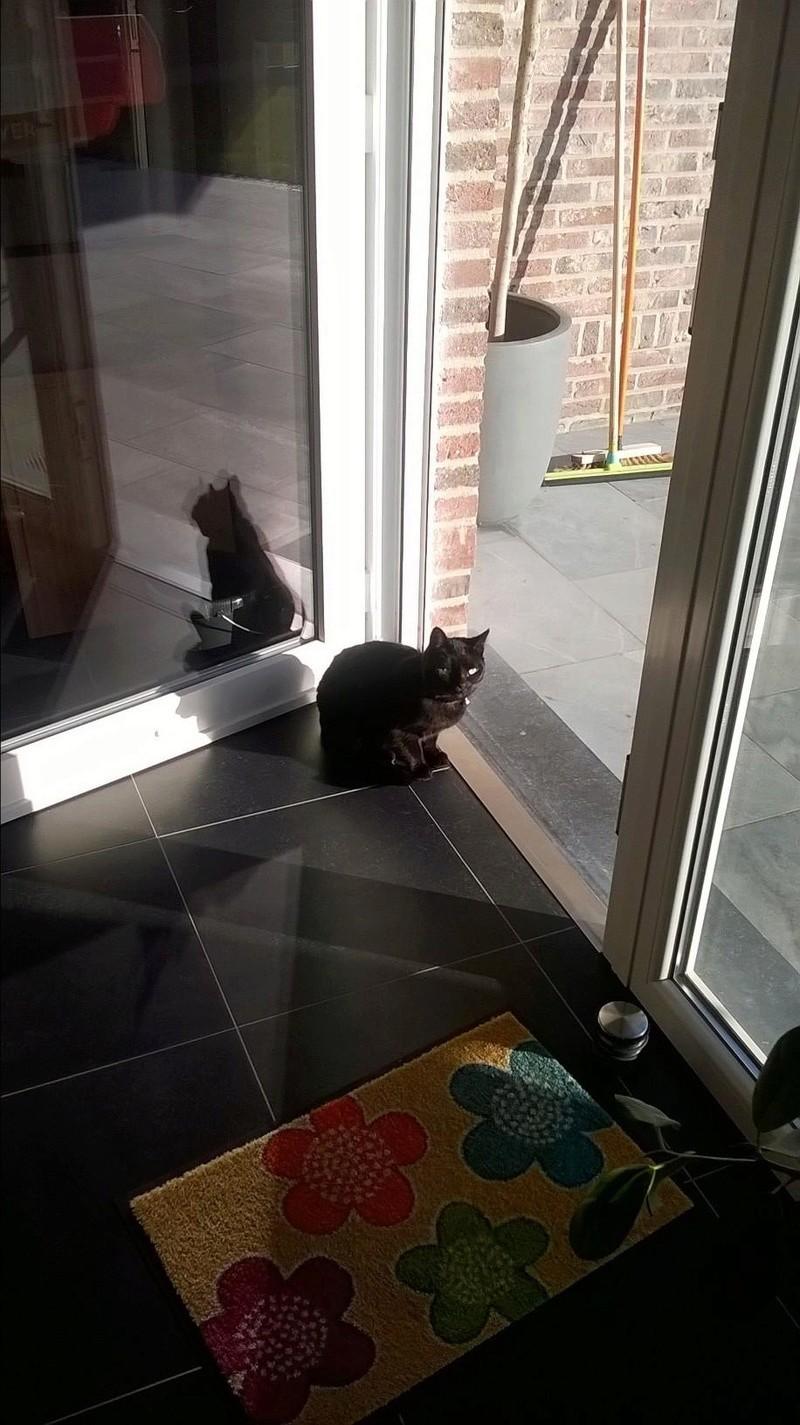 LUCY, adorable petite panthère noire de salon de 11 mois Lucy1210