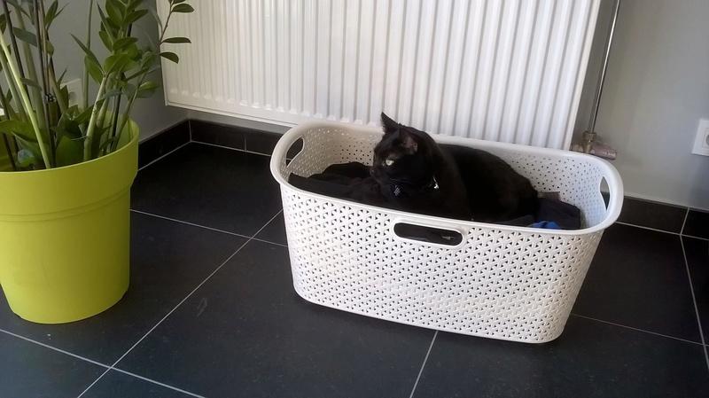LUCY, adorable petite panthère noire de salon de 11 mois Lucy2110