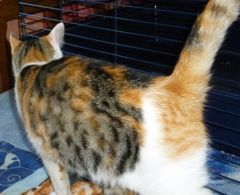 NINA ET NINO, adorables petits chatons de 4 mois P1040716