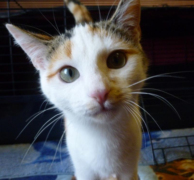 NINA ET NINO, adorables petits chatons de 4 mois P1040718