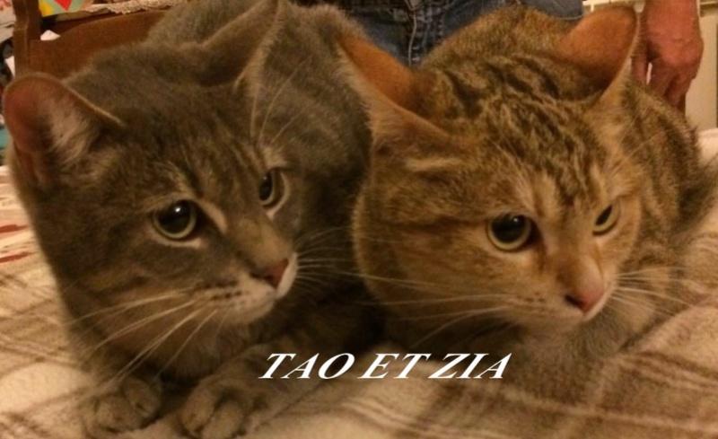 ZIA ET TAO, ADORABLE PETIT COUPLE DE 17 MOIS  Taoetz10