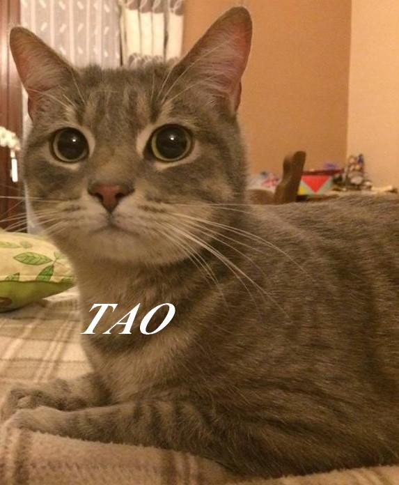 ZIA ET TAO, ADORABLE PETIT COUPLE DE 17 MOIS  Taopho10