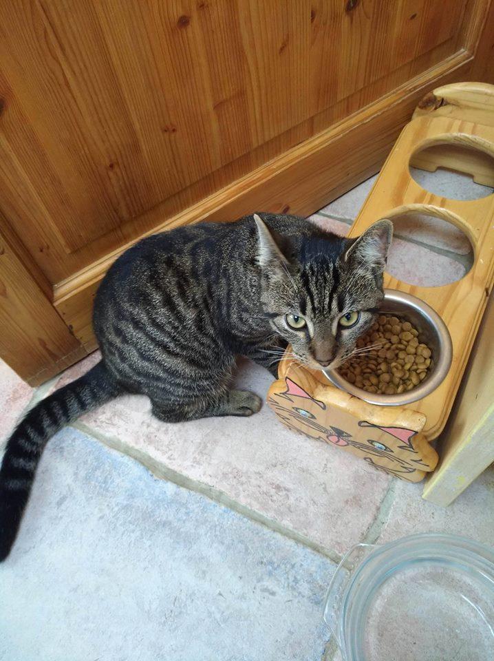 TIM, adorable chaton tigré foncé de 6 mois Tim110