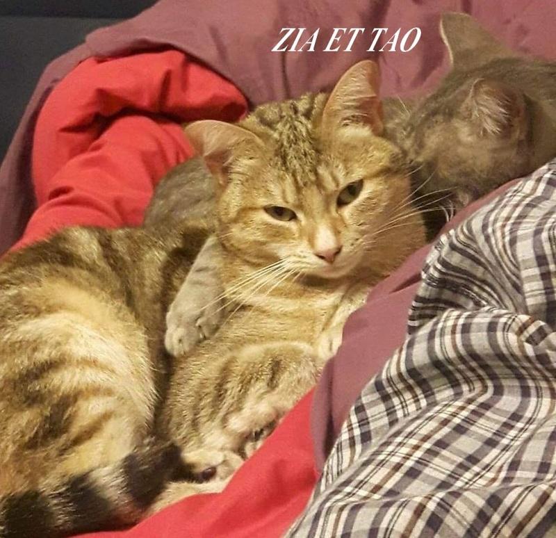 ZIA ET TAO, ADORABLE PETIT COUPLE DE 17 MOIS  Ziaett10