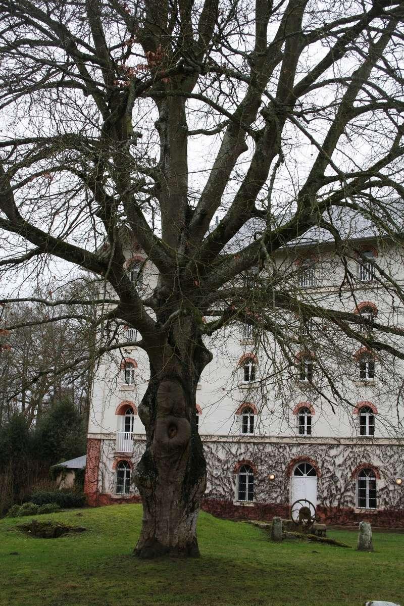 111ème Rendez-Vous de la Reine - Rambouillet le 21 janvier 2018 - Page 2 Img_4514