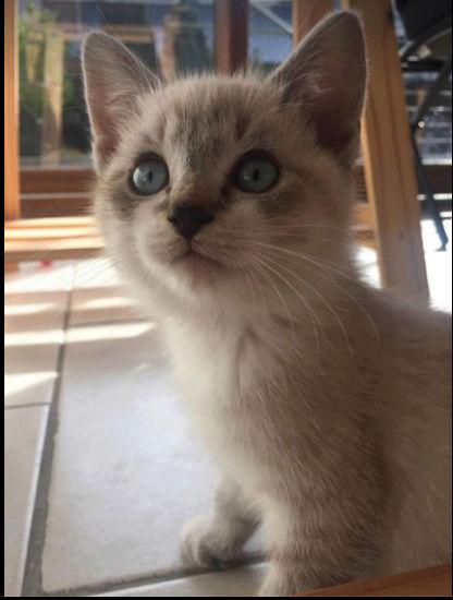 Caramel né le 20 août 2017 Carame13