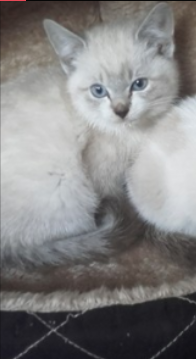 Caramel né le 20 août 2017 Choupy10
