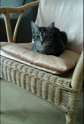 KITTY ( ex WESS) né le 15 mars 2017 Kitty10