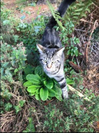 KITTY ( ex WESS) né le 15 mars 2017 Kitty_12