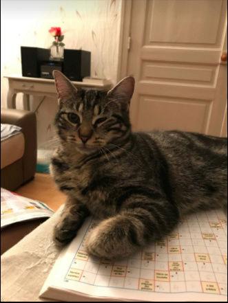 KITTY ( ex WESS) né le 15 mars 2017 Kitty_13