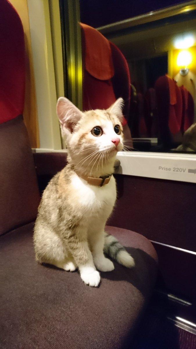 LE MANS ; Insolite. Un tour en train pour le chaton Noisette Dtkmf110