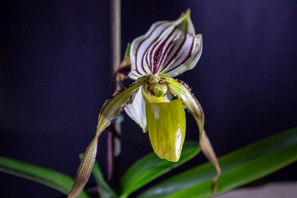 Orchideen 3 (fortlaufende Seiten 300 bis 400) - Seite 20 5d4_0310