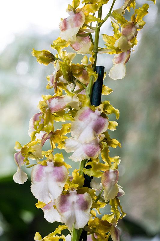 Orchideen-Neuzugang - Seite 41 Milton10