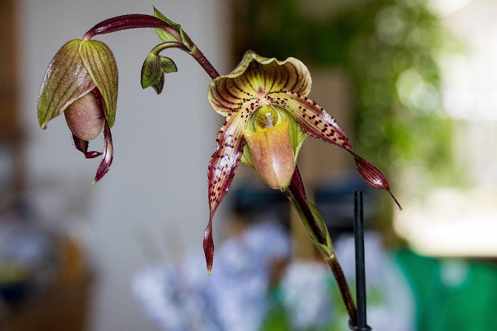 Orchideen-Neuzugang - Seite 41 Pinoch10