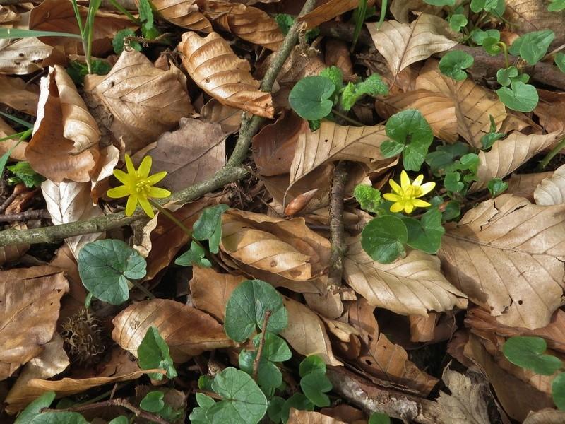 Erste Frühlingsboten im Garten und in Wald und Flur - Seite 65 Img_7810