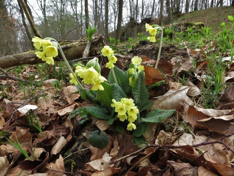 Erste Frühlingsboten im Garten und in Wald und Flur - Seite 65 Img_7811
