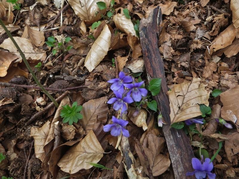 Erste Frühlingsboten im Garten und in Wald und Flur - Seite 65 Img_7911