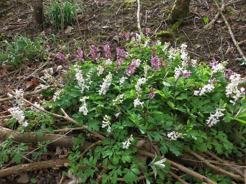 Erste Frühlingsboten im Garten und in Wald und Flur - Seite 65 Img_7912