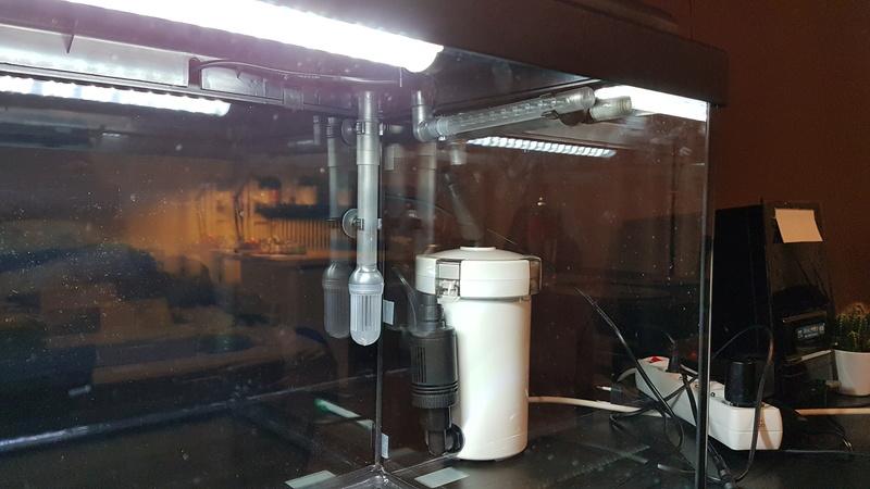 Aquascaping dans un aquadream 60L 20180310